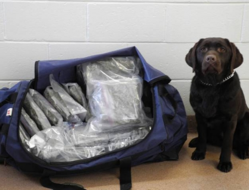 What happens to drug-sniffing dogs when marijuana is legalized in Canada?