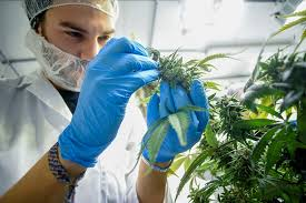 3 Tips for Partnering With a Hemp Inspection Lab