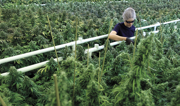 Canopy Growth Corporation Comments On The Year That Was 2016 O