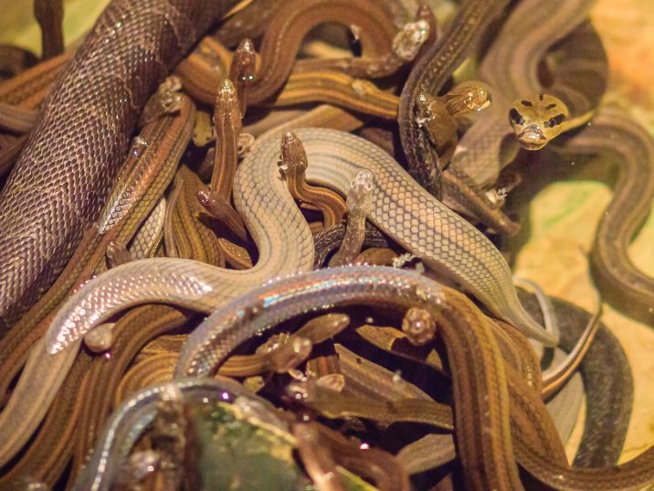Cannabis, spiders and snakes, oh my: Police get more than they bargain for during raid of home