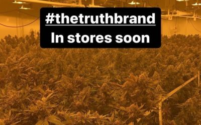 Former NBA star Paul Pierce takes to Instagram to show off massive cannabis grow