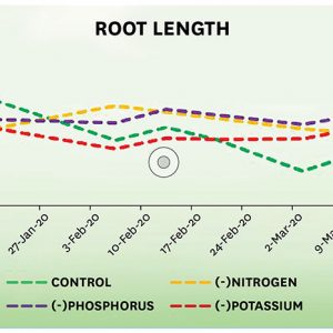How nutrient deficiency affects the growth of cannabis plants