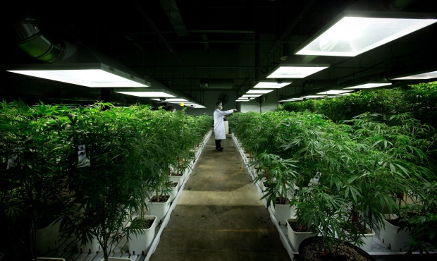 Sun Life Financial to add medical pot option to group benefits plans