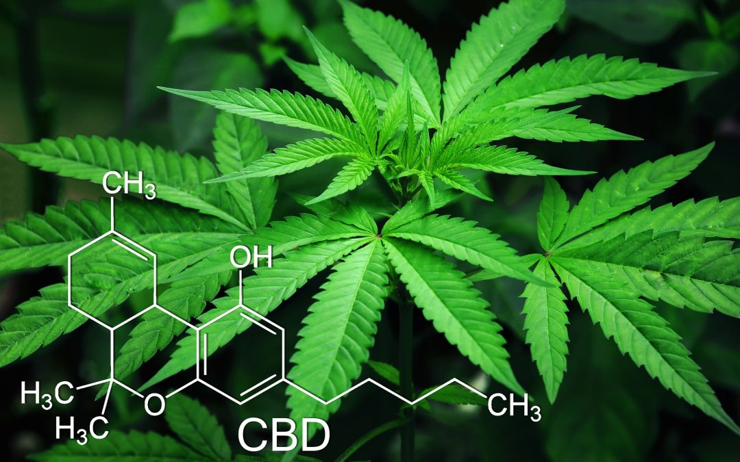THC vs CBD: What's What?