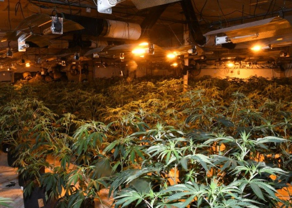 Three men arrested as police bust largest cannabis farm ever found in Lincolnshire