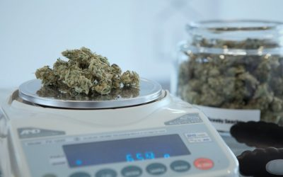 Is Legal Pot Dry, Not-So-High and a Little Light?